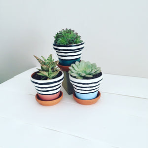 Funky Zebra Pot Trio With Succulent