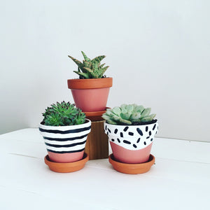Triplet Hand-Painted Succulent Set