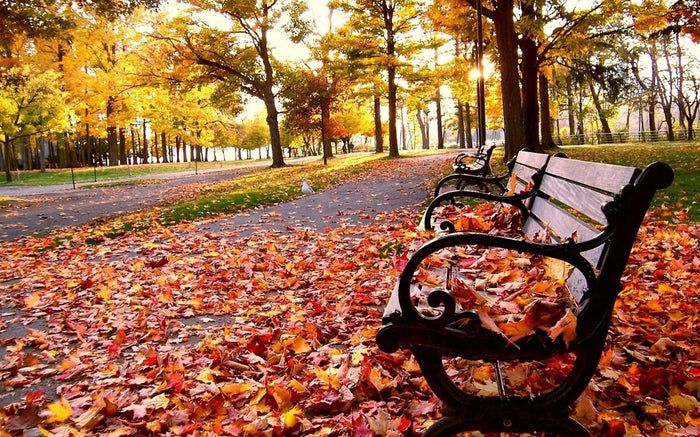 Top 5 Fall Season Things To Look Forward To