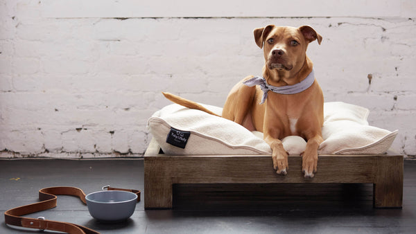 Pet Bed & Pet Bed Gold Brushed Steel Frame | KEETSA