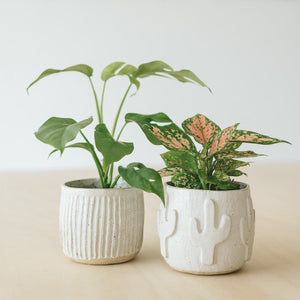Pot Planter Workshop