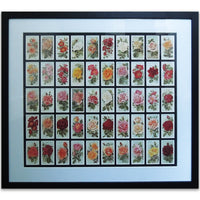 Roses Reproduction Cigarrete Cards -  Framed