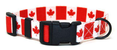 Canada flag dog collar