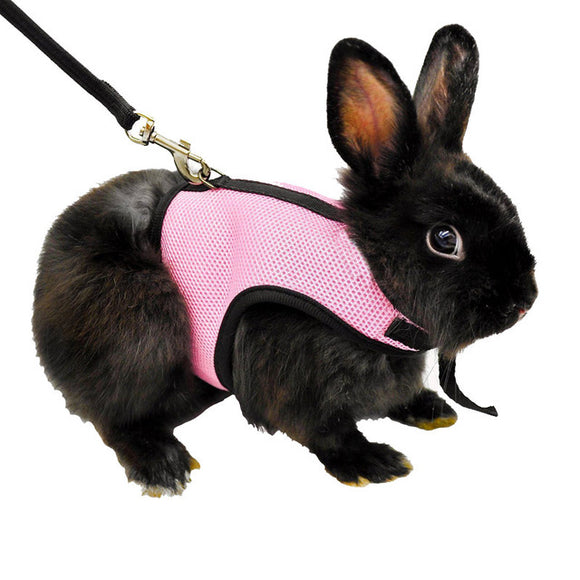 Rabbit and Guinea Pig Harness And Leash - 3 Colors - World Pet - The Best Pet Store in US. Dog Cat Hamster Chinchila Parrot Parakeet Animals Pet Articles Supplies