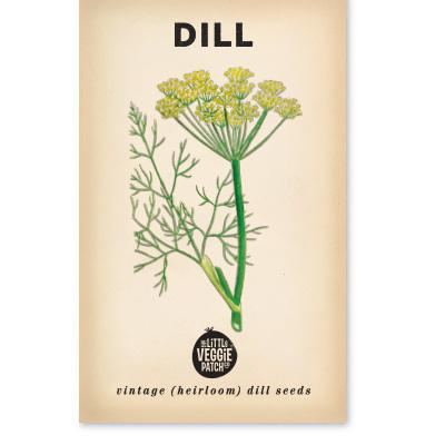 Little Veggie Patch Co - DILL