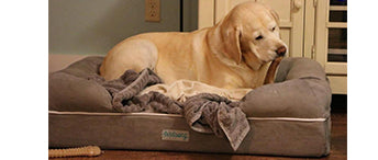 Best tips for picking the perfect pet bed