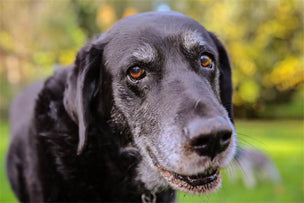 Senior Care for Dogs