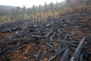 Forestry clearfall, Weld Valley