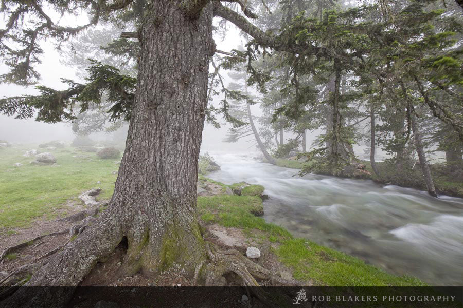 EU4 :: Scots pine in mist, Parc National des Pyrenees