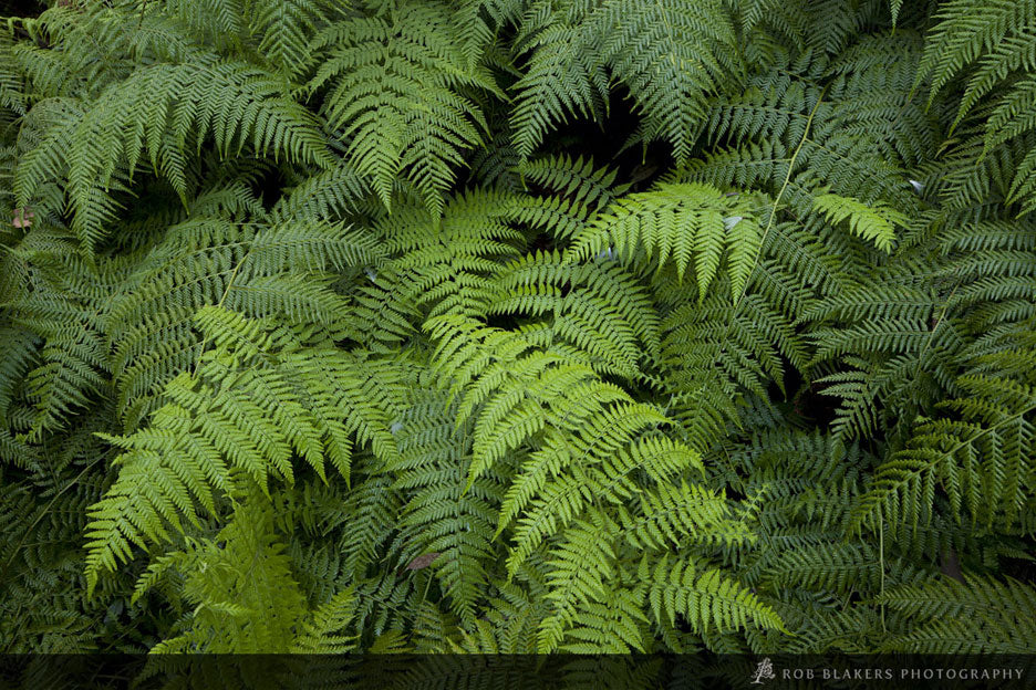NSW34 :: Fern detail