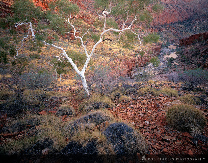 NT12 :: Ormiston Gorge 3