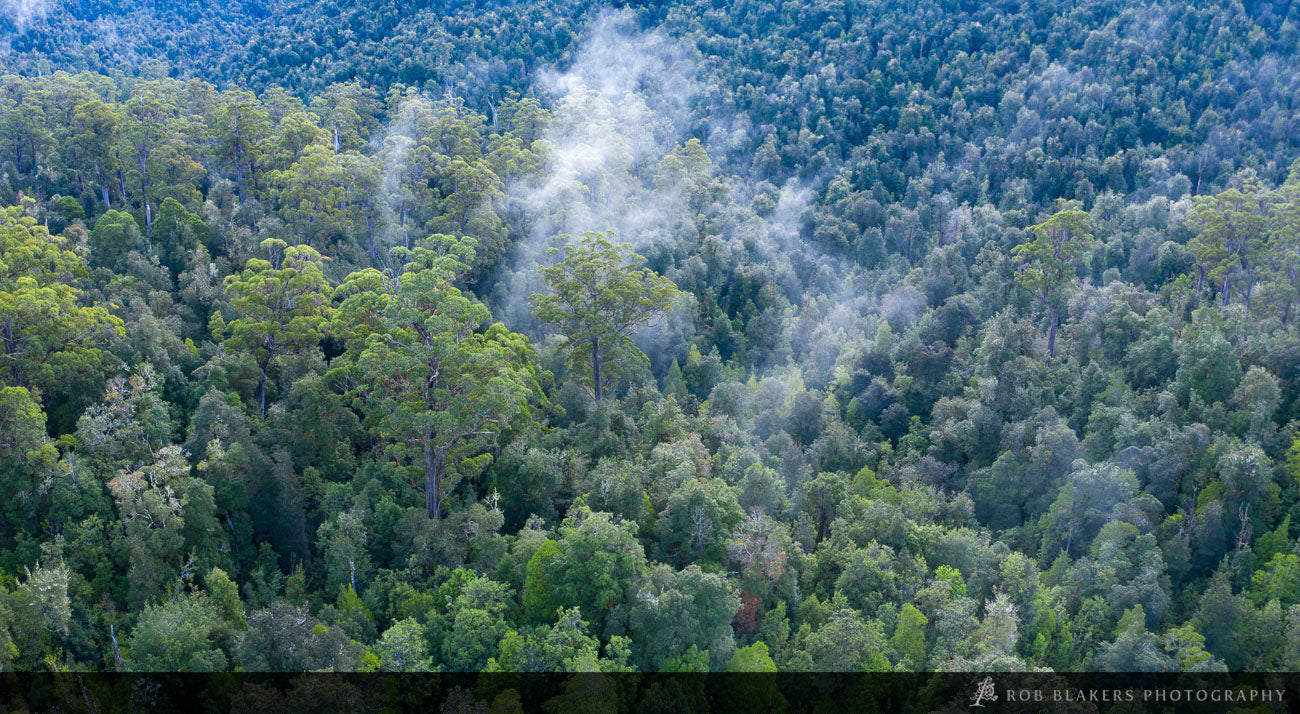 TF171 :: Tarkine rainforest aerial 5