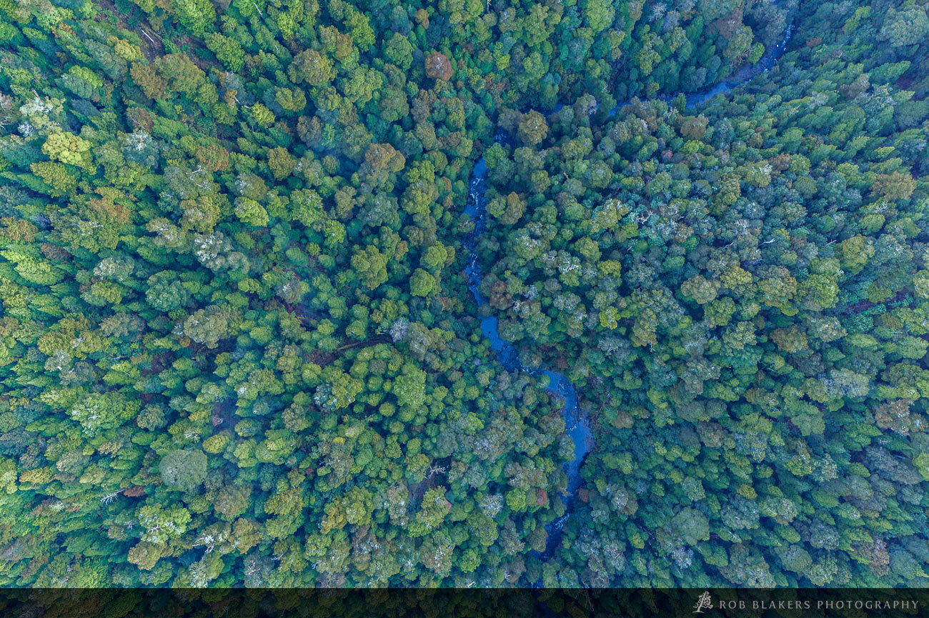 TR69 :: Tarkine rainforest aerial
