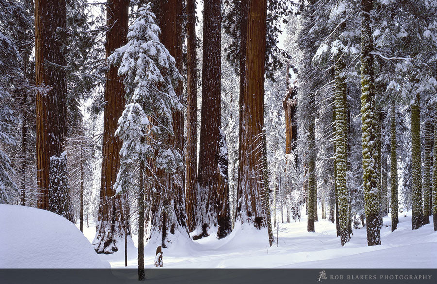 UW31 :: Winter, Sequoia National Park