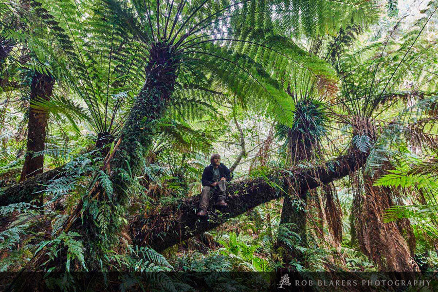 VIC7 :: Tree ferns, Kuark forests