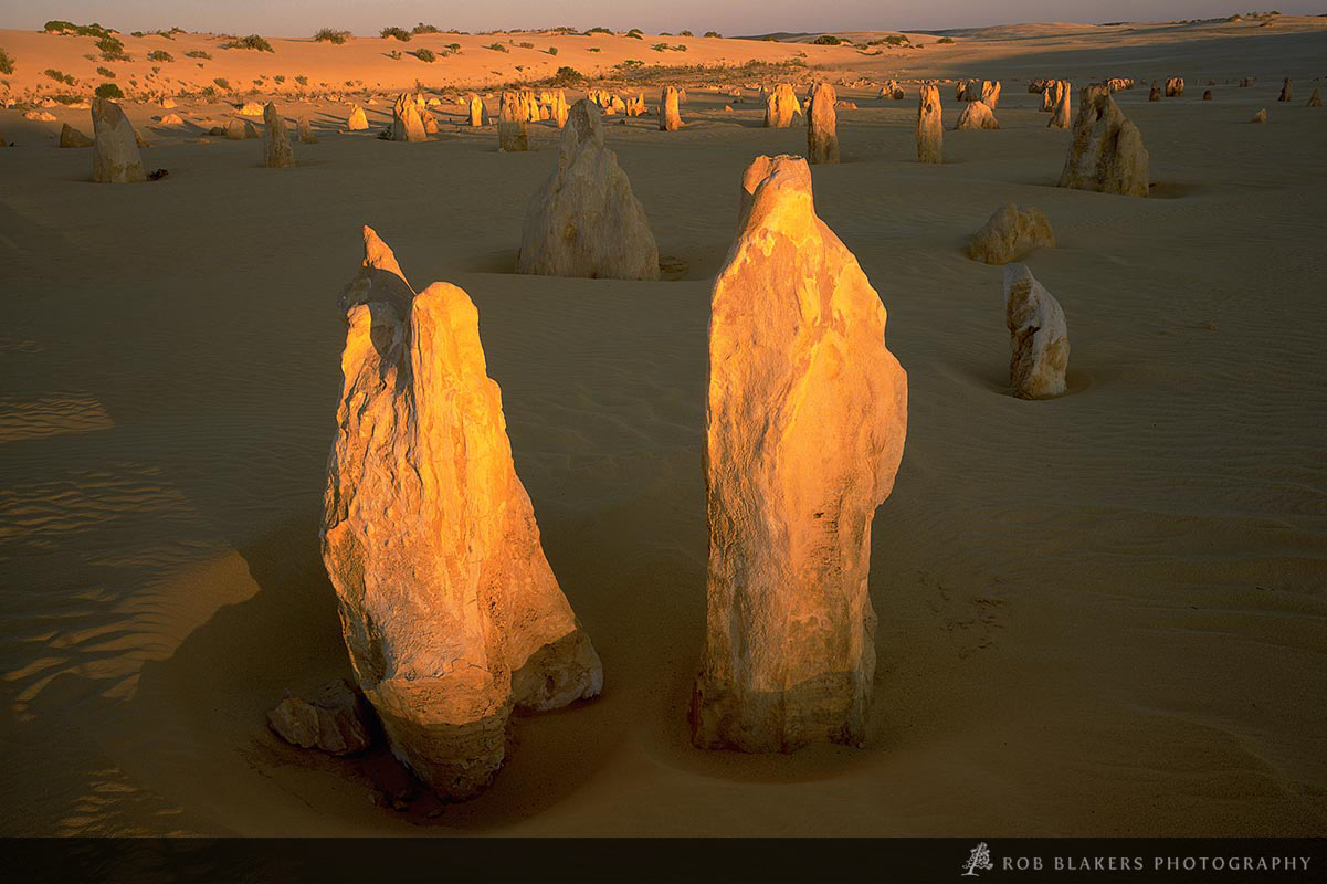 WA17 :: Pinnacles, Nambung NP