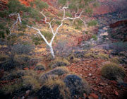 Ormiston Gorge 3