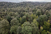 Tarkine rainforest, aerial view 2