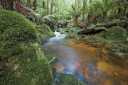 Rainforest stream, Blue Tier