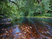 Rapid River 4, Tarkine