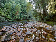 Rapid River, Tarkine