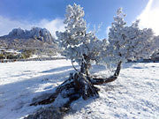 Ice rime, Walls of Jerusalem NP
