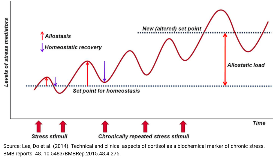 when do overuse or overtraining injuries occur?: graph of the interplay between homeostasis and allostasis