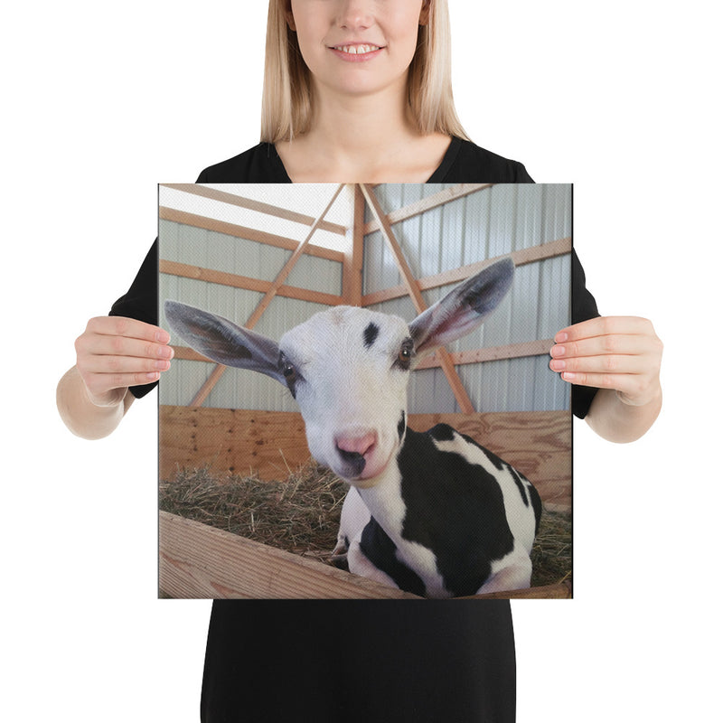Moo Canvas
