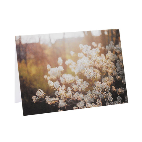 Greeting Card Film Photography | Dreamy Blossoms | Blank Inside