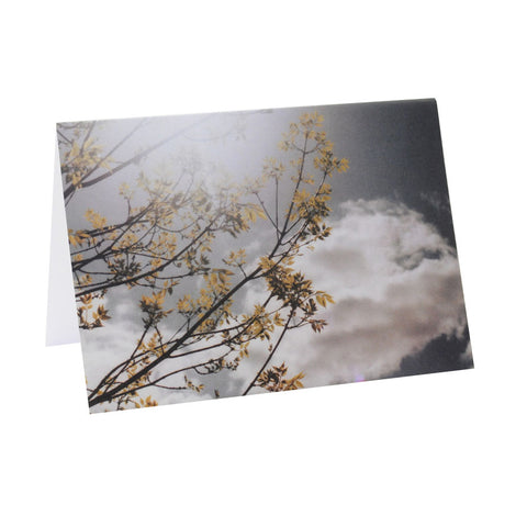 Greeting Card Film Photography | Nature | Blank Inside
