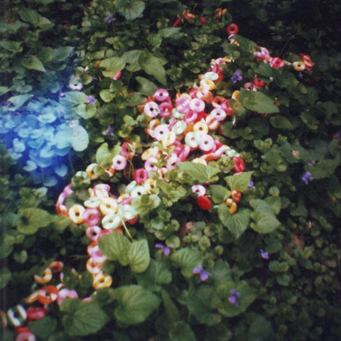 Diana Mini Film Photograph by Marie Gardeski | Candy in the Ivy | 8x8 print