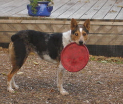 Clementine with Frisbee