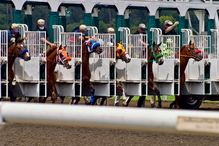 After a Slew of Equine Fatalities, What's Happening at Santa Anita Park?