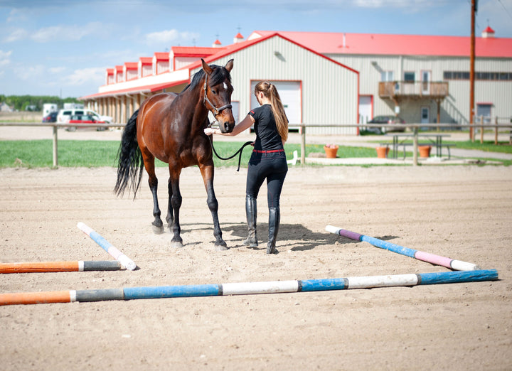 5 Things a Physiotherapist Wants You to Know About Horse and Rider Health