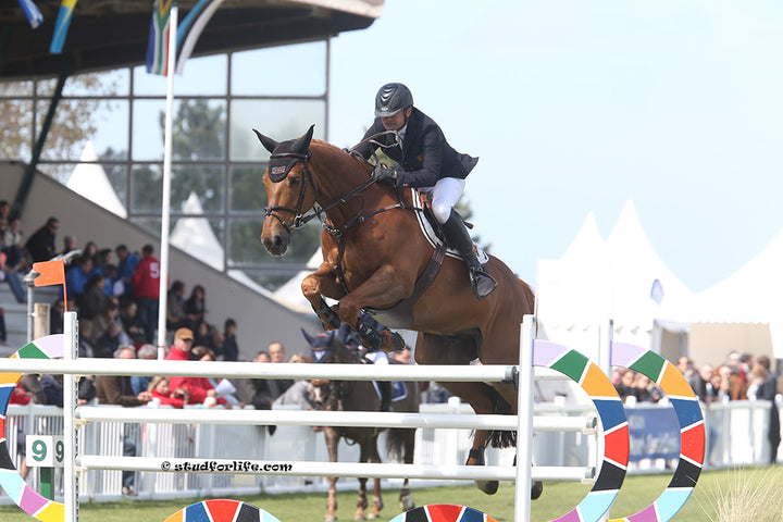 Phedras De Blondrel competing at Le Touquet, 2014 with rider Christian Hermon Ph. studforlife.com