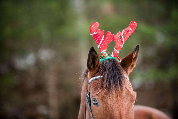 Happy Holidays From Our Barn to Yours