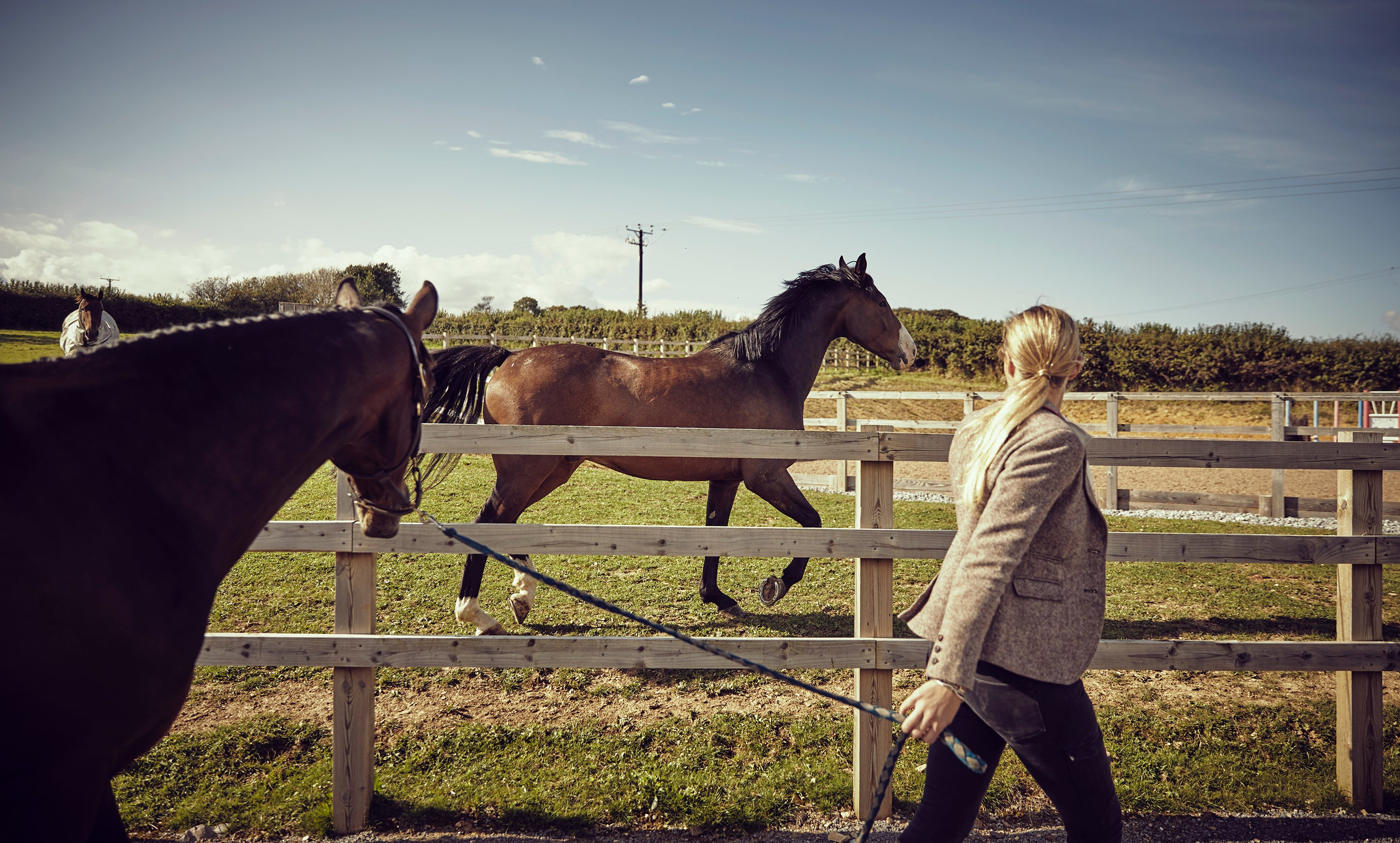 What To Do When You Can T Catch Your Horse And It S Not Funny Anymo Noelle Floyd