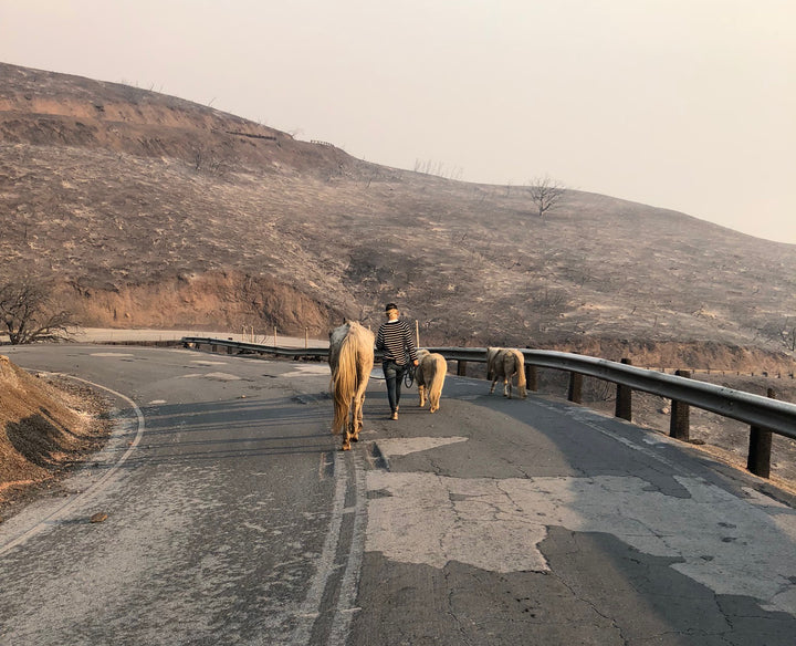 The Fires Are Out, but the Fight Isn't Over: Help Support the Horse Community Affected by the California Wildfires