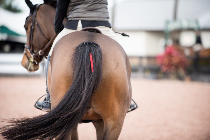 'Why Does My Horse _?': Tik Maynard Takes On Masterclass Members' Horse Behavior Questions