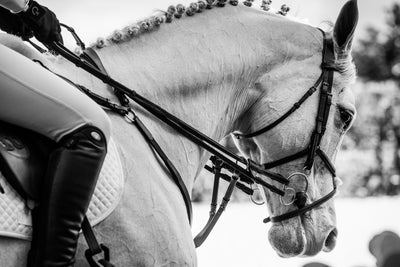 Where Do We Go from Here? One Rider's Hope For a Post-COVID Horse Industry