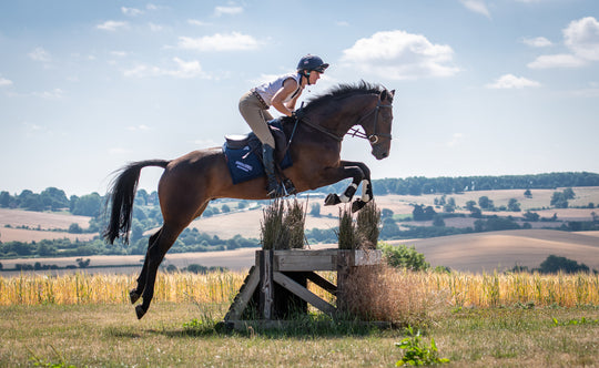Building a Future: Piggy French's Secrets to Training the Five-Year-Old Horse