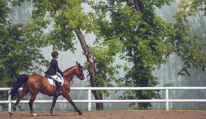 "Ask Us: ""My young horse and I had a miscommunication on course and now he doesn't trust me."""