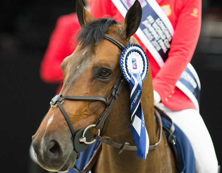 Jeroen Dubbeldam on Longines FEI Jumping World Cup™ Washington Winner Breitling LS as a Young Horse