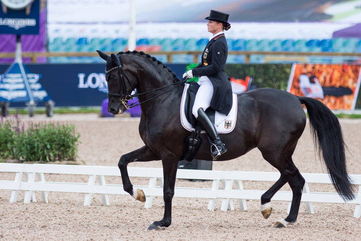 Power and Grace: An Insider's Guide to Dressage in 2018