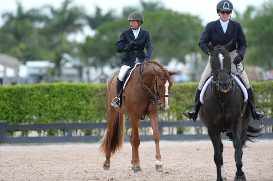 6 Ways to Achieve a Confident Schooling Ring Experience