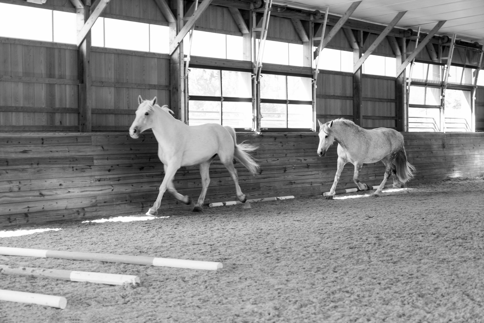 It's What the World Needs': Gateway Horseworks Gives