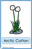 Arctic Plants and Landforms Cards - Printed Product