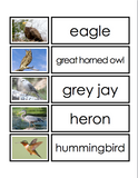 Northern Canadian Birds Picture-Word Matching Cards