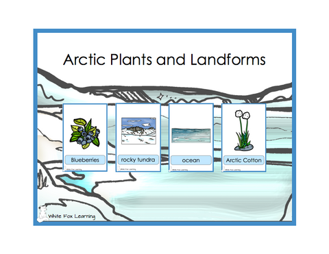 Arctic Plants and Landforms Cards - Digital Product