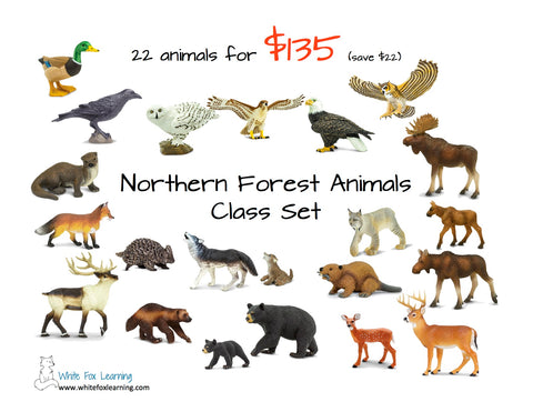 Northern Forest Animals Class Set
